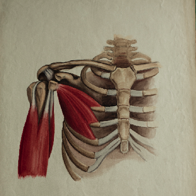 AnatomyX: Musculoskeletal Cases