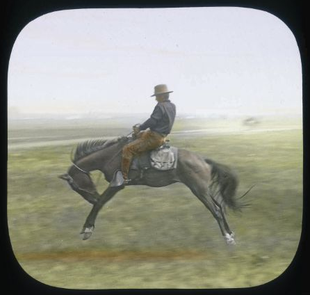 Theodore Roosevelt Collection Photographs